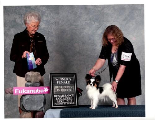 Marni at Renaissance, Chilliwack BC, Winner's and Best Puppy at 1 year
